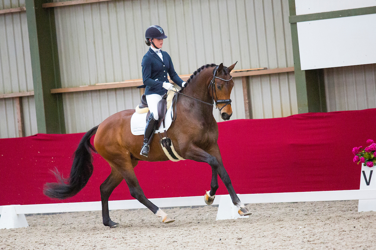 Horsefood Dressuur Talent Finale @ Manege De Kraan
